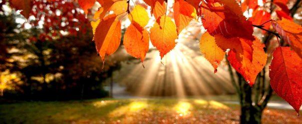 Мастер -класс на тему «Осень»